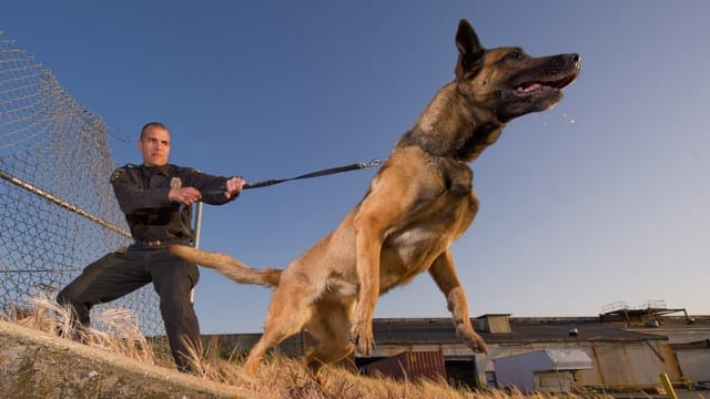 ? Law Enforcement K9's Get Added Protection From a Woman on a Mission