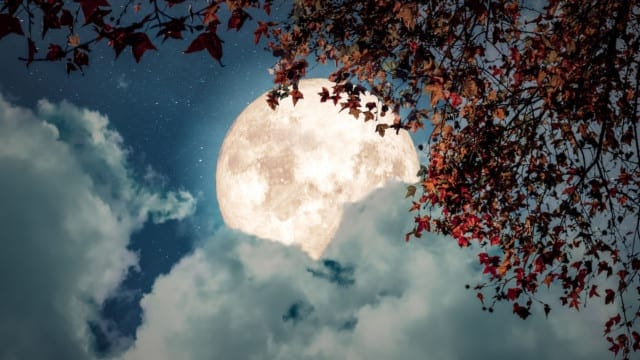 Have You Been Howling at the Moon Lately?