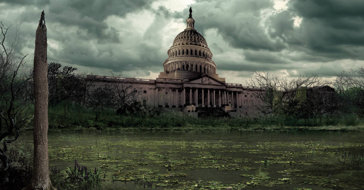 Stories from the Swamp and Beyond