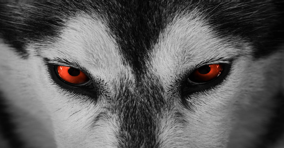 H.R.1 Election Integrity Act is a Wolf in Wolf's Clothing
